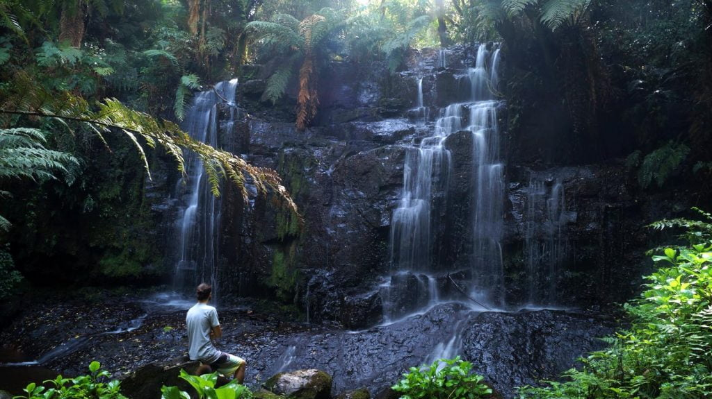 Shinrin yoku - kąpiele leśne - nowym sposobem na zachowanie zdrowia