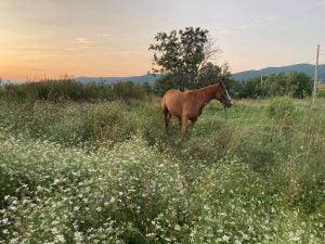 koń stojący na łące