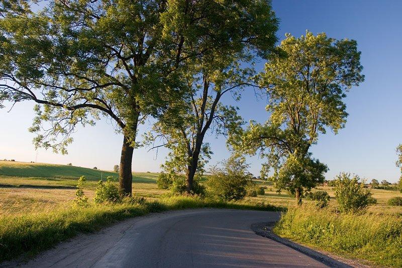 droga na mazurach z drzewami po bokach