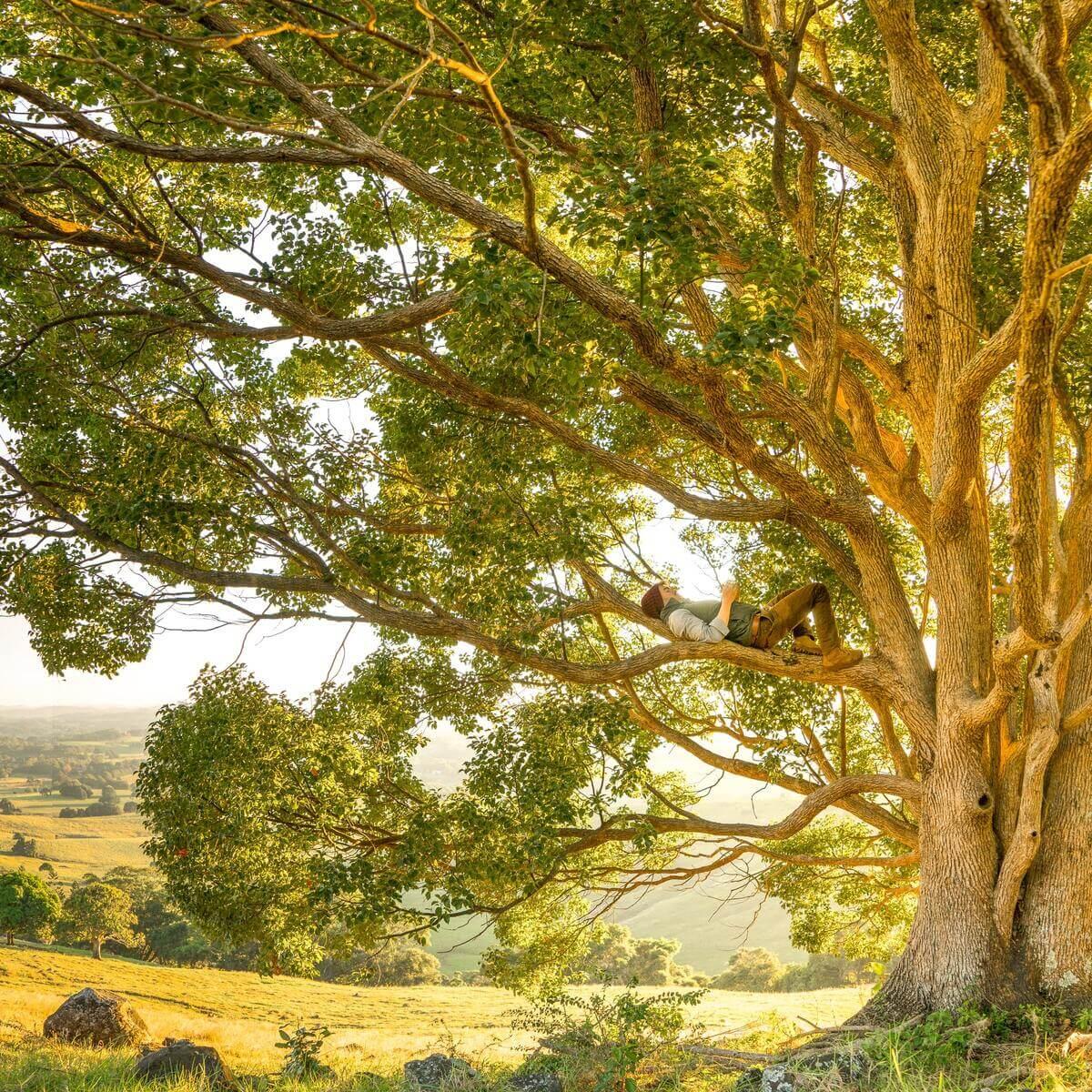 mężczyzna leżący na gałęzi drzewa